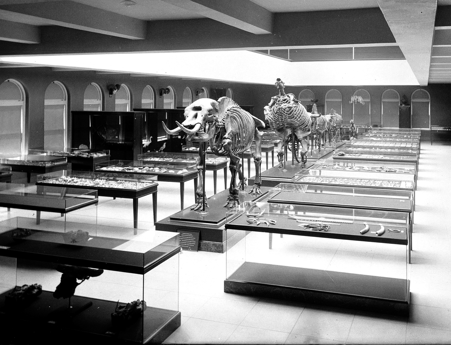 Interior view of the Los Angeles County Museum of Natural History showing displays of prehistoric skeletons, 1920. Courtesy: California Historical Society Collection, San Francisco / USC Digital Library, Los Angeles. Photo: User: Fæ / Wikimedia Commons / CC-0