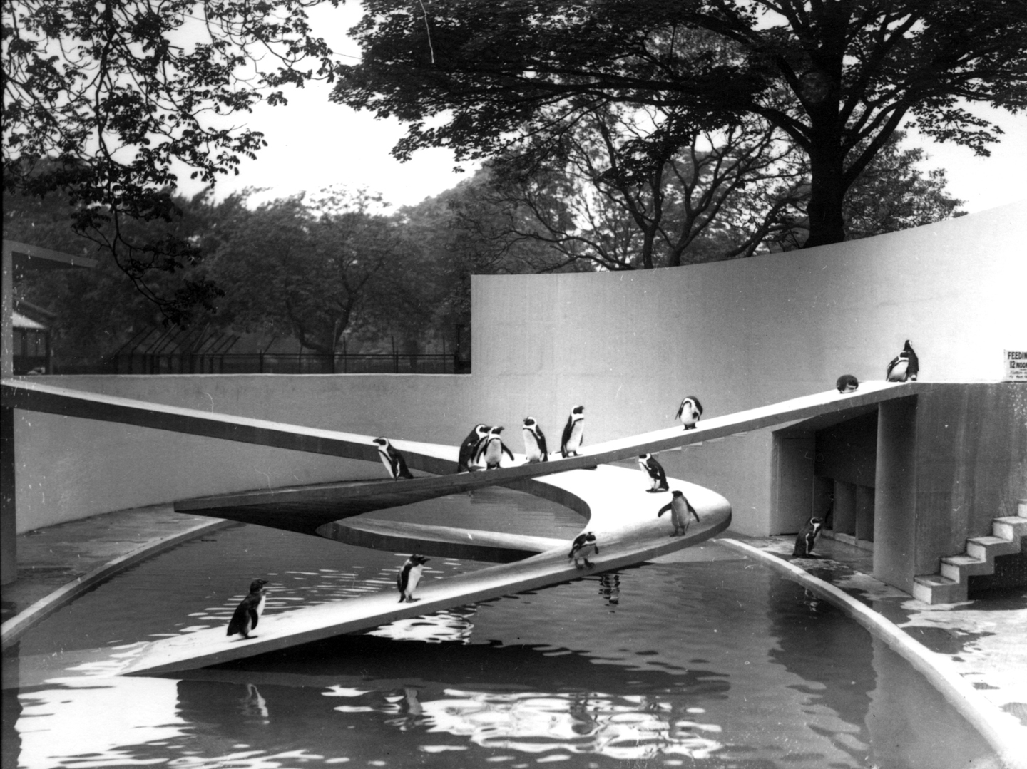 FW Bond / ZSL, Berthold Lubetkin Penguin Pool at ZSL London Zoo, 1935. © Zoological Society of London. Courtesy: Zoological Society of London