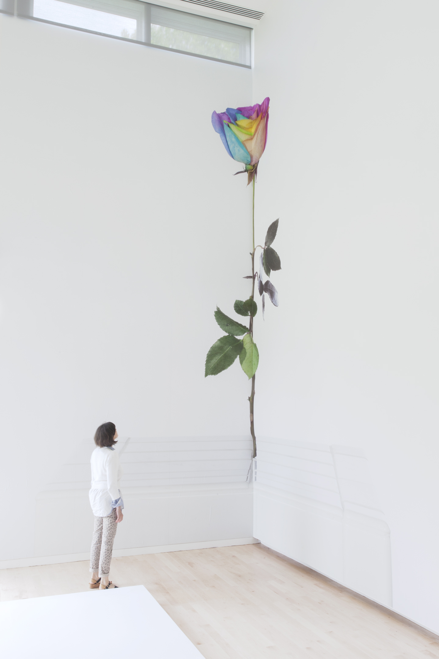 Virginia Poundstone: Flower Mutations installation view at The Aldrich Contemporary Art Museum, Ridgefield, 2015. Courtesy: The Aldrich Contemporary Art Museum, Ridgefield. Photo: Jean Vong